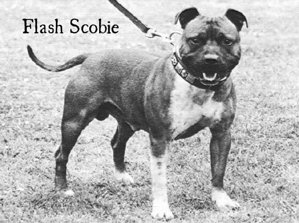 FlashScobie