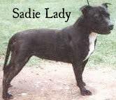 SadieLady