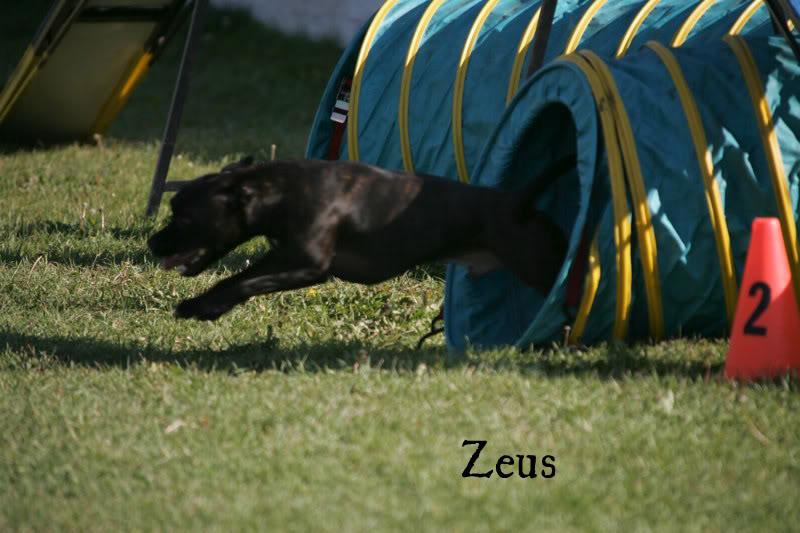 Zeus3