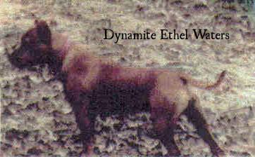 dynamiteethelwaters2