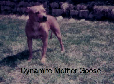 dynamitemothergoose