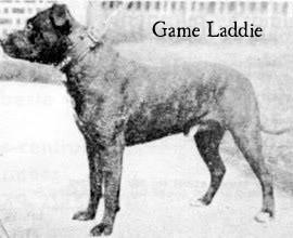 gameladdie