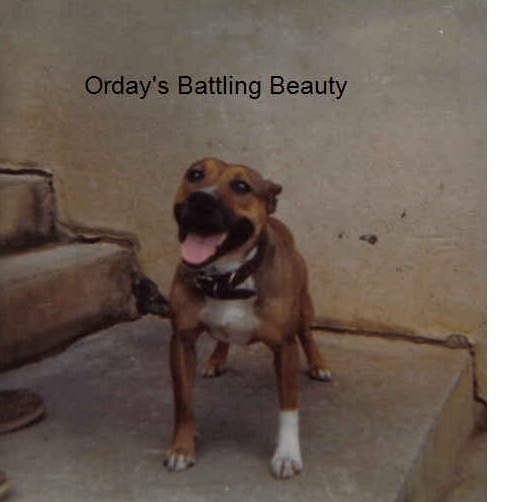 orday'sbattlingbeauty