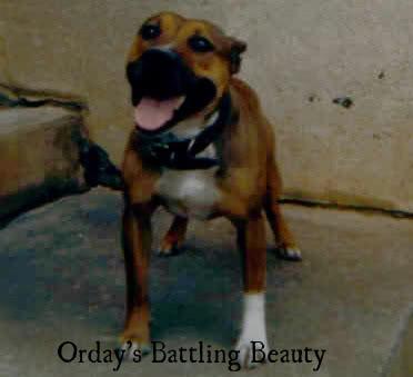 ordaysbattlingbeauty