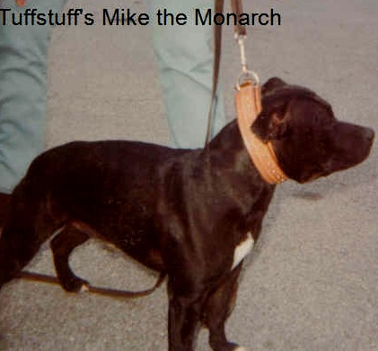 tuffstuff'smikethemonarch
